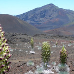 Haleakala Crater with Silversword Plants